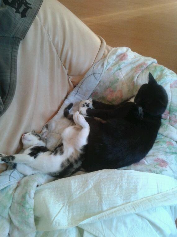 elle est belle la vie de chat lool