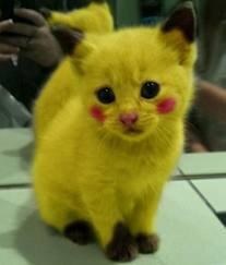 Un Pikat-chat O.o x))