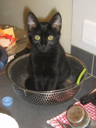 la terreur de la cuisine !!!!!!!!!!!!!!!