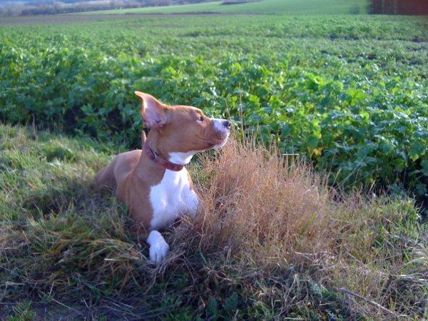 Mon chien :)
