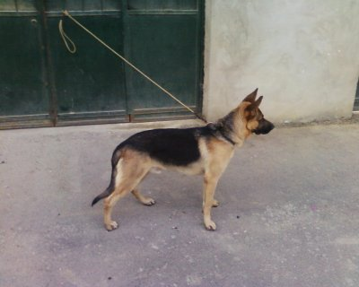 mon chien 10 mois