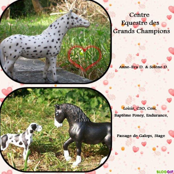 Bienvenue au Centre Equestre des Grands Champions !!