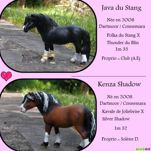 Java du Stang & Kenza Shadow