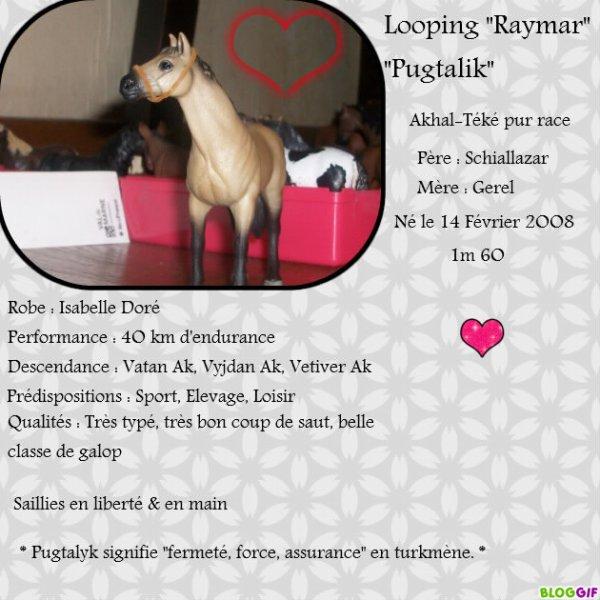 "Looping ""Raymar"" ""Pugtalik"""