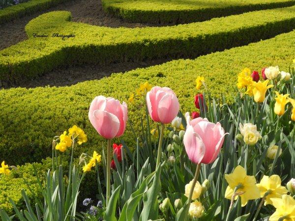 .                       Jardin de Versaille                    .