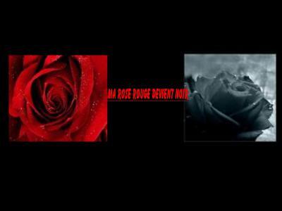Ma rose rouge devient noir tokio hotel for Sarah riani miroir miroir parole