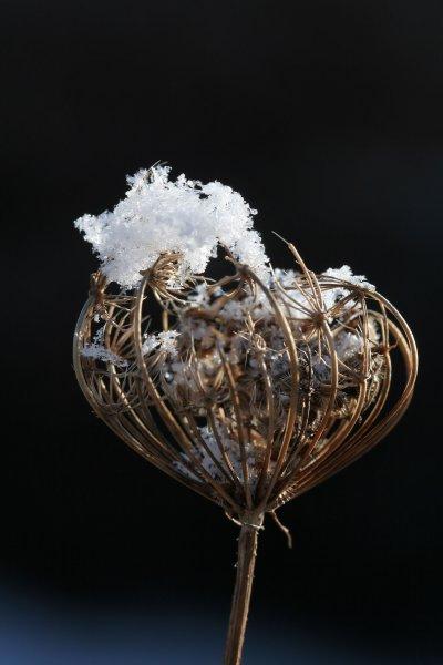 270 - neige & cristaux - décembre 2010