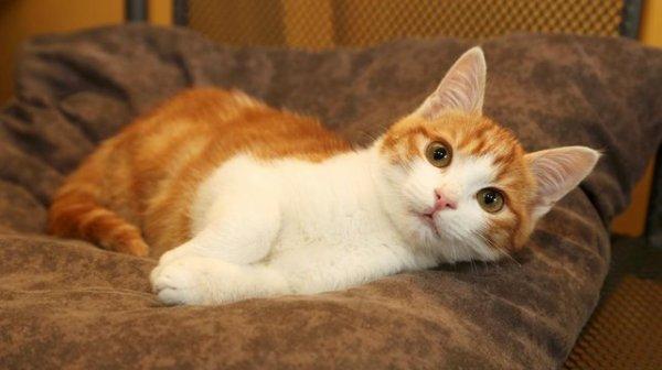 """Oscar, le chat qui à fait """"réagir"""" toute la France."""