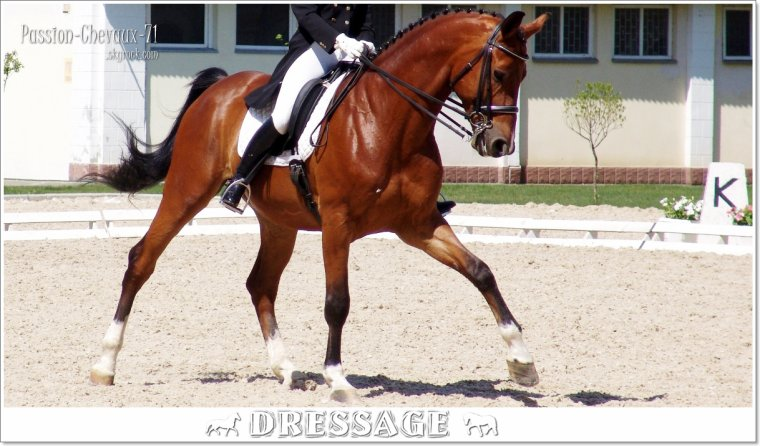 DRESSAGE - SAUT D OBSTACLE - CROSS