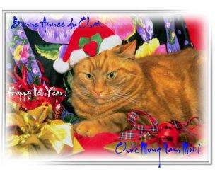 Bonne année du chat !