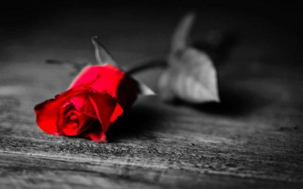Voici une fleur que j'ai cueillie pour toi... (Victor Hugo)