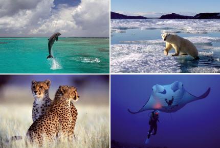 blog consacré aux animaux sauvages