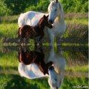 Photo de chevaux-----------pasion