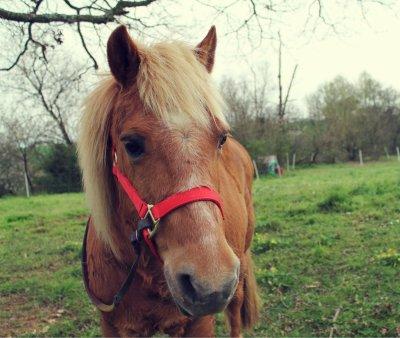 Le plus beau ! *.* ♥