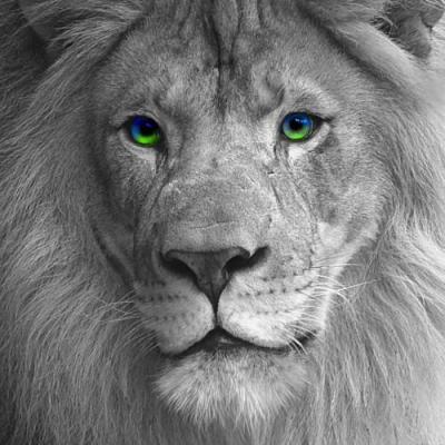 Le lion roi des animaux - Animaux du roi lion ...
