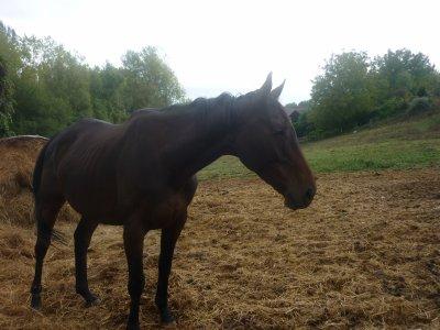 Chandenham (mon ancien cheval)