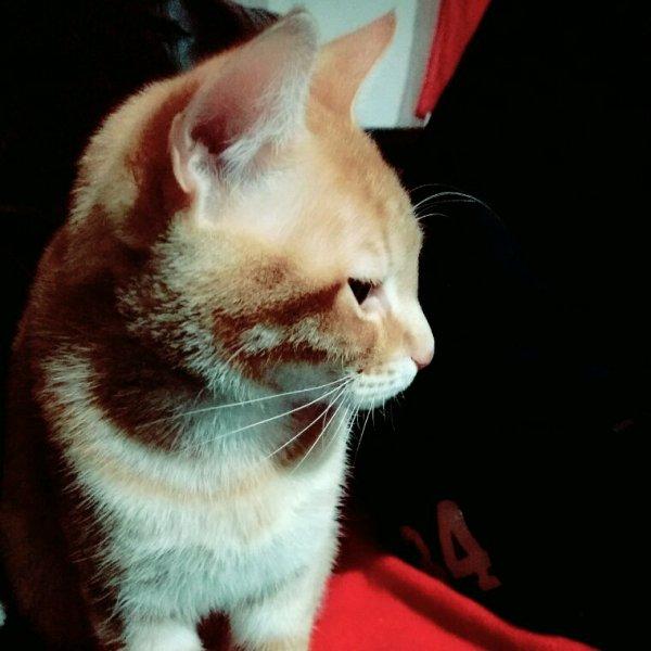 Les p'tit chat