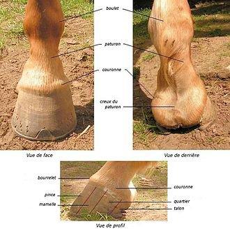 Pas de pied pas de cheval!(Partie 1)