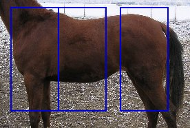 La Morphologie du cheval . (Partie 3)