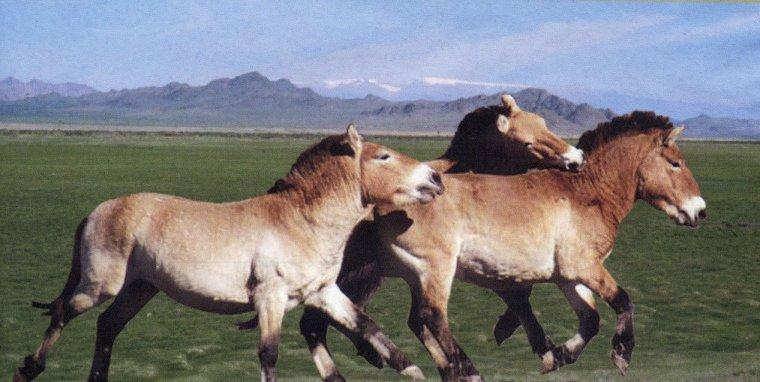 Quelque chevaux sauvage !!!