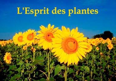 Plante Magique !!!