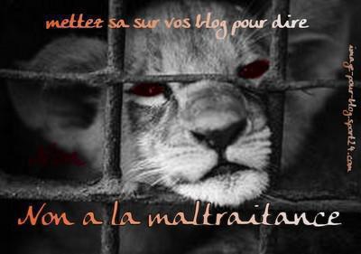 NON ! à la MALTRAITANCE !!!!!