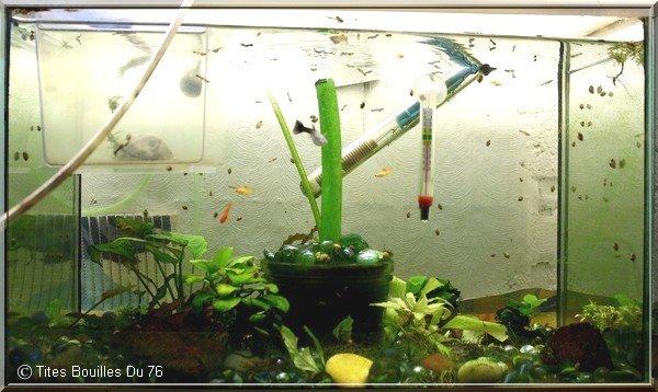* Les aquariums sur Tites Bouilles Du 76 *