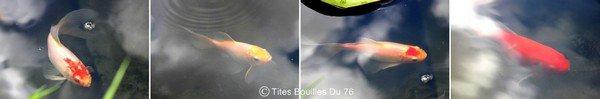 * Les poissons sur Tites Bouilles Du 76 *