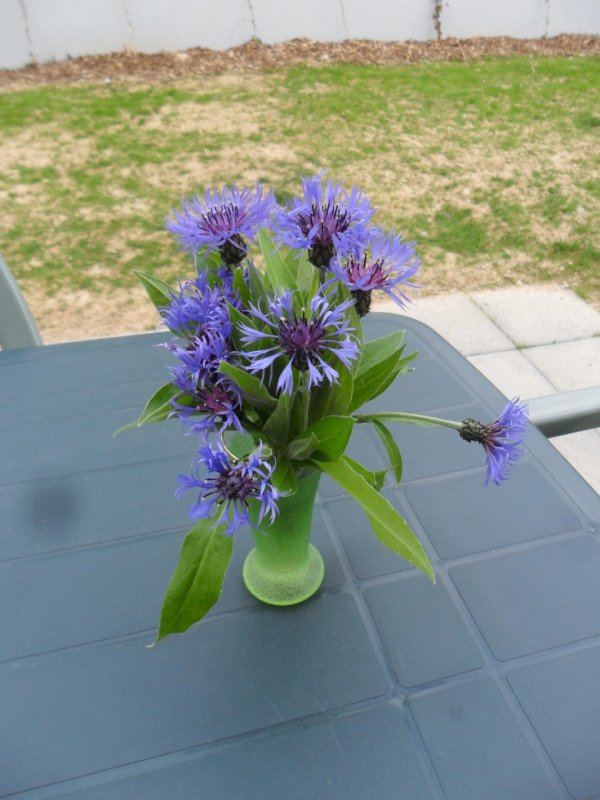 bouquet de myosotis