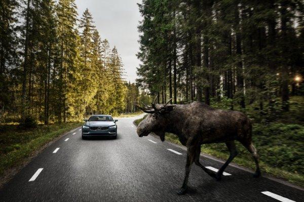 Volvo S90 : Officielle