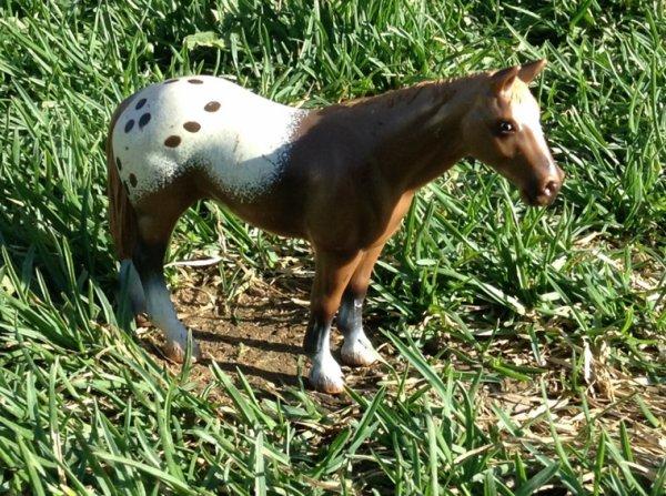 Les chevaux du Ranch Équestre sont toute dans les grand champs