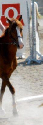 Je t'aime, mon poney. ♥