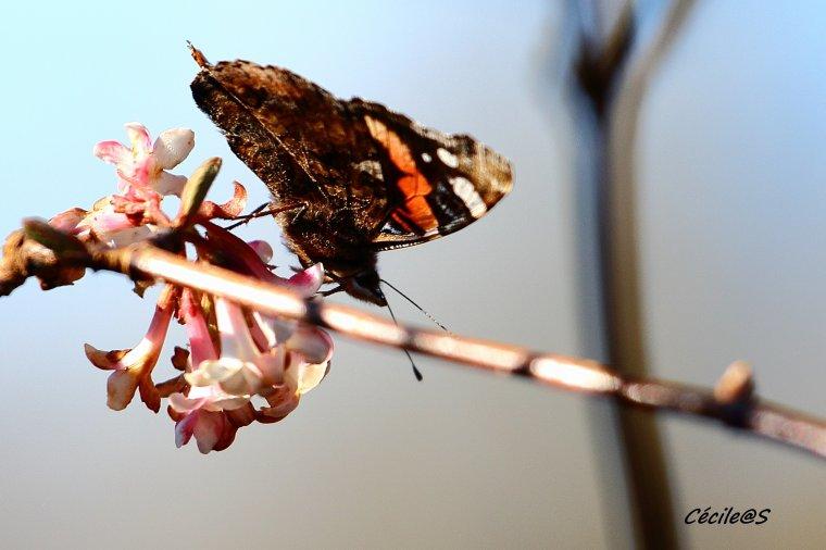 Les papillons arrivent :)