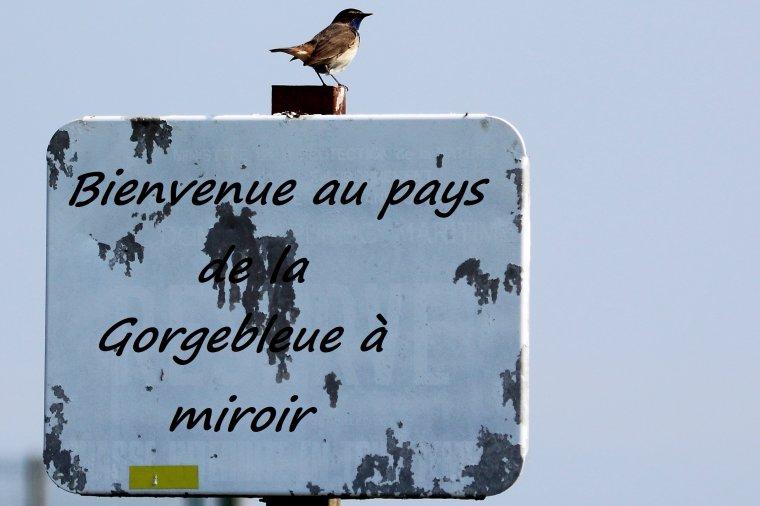 La Gorgebleue à miroir