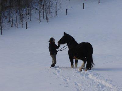 osheen dans la neige, décembre 2010