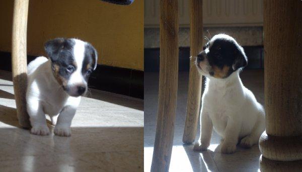 Mon chien  Nommé Hercule !