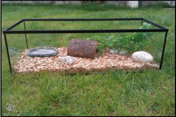 Articles de miss turtle tagg s enclos pour tortue blog for Amenagement jardin pour tortue