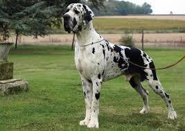 mon futur chien