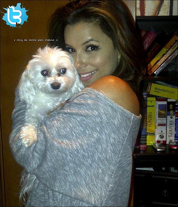 • o1 Février 2o11 •  - Los Angeles, Etats-Unis. 📷 Eva a posté une « Photo d'Elle & son chien Jinxy ».