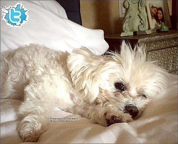 🎥 Eva a posté une photo d'elle sur le tournage de Hot and Bothered.  19 Février 2015. Los Angeles, États-Unis.