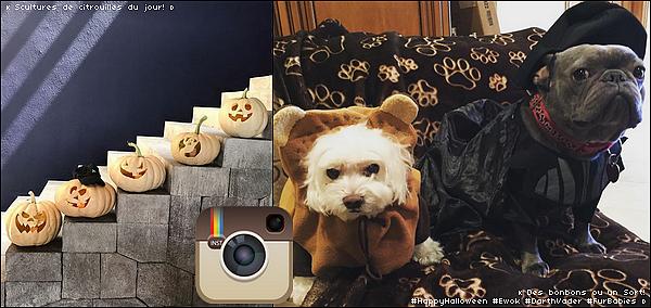 • 31 Octobre 2o16 •  - Los Angeles, Etats-Unis. 📷 Eva a posté des « Photos de ses chiens pour Halloween ».