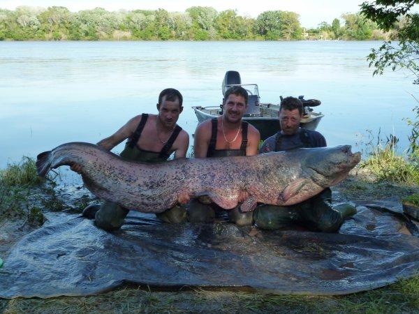 finition en beaute 2.44m fish depassant tous nos espoirs