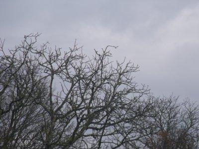 Destruction du nid de frelon asiatique