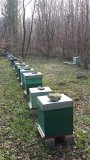 Photo de apiculteur