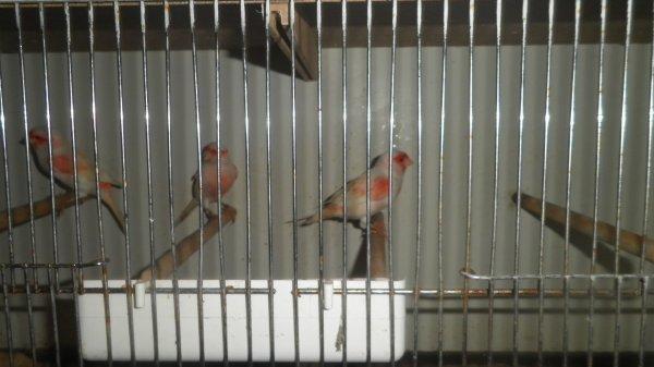Mon espace ornithologique