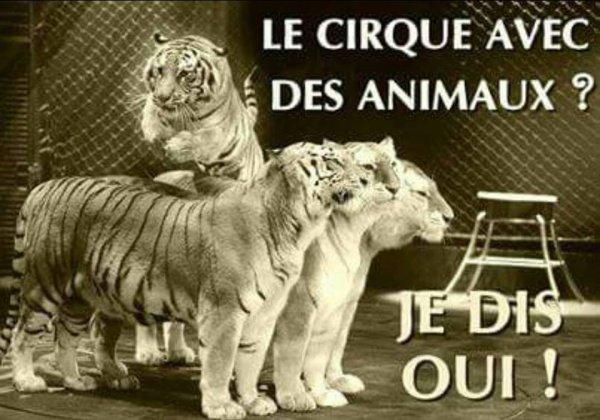 Vive le cirque avec animaux !