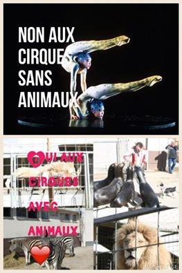 Hors série 2 : les maires et les cirques