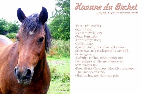 mon amour > Le cheval est la plus noble conquête que l'homme ait jamais faite.
