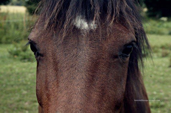 mes louloutes Le cheval a l'art de nous faire craquer