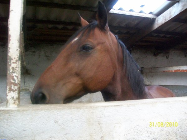 je vous presente éclaire sais un des cheval avec qui je mamuse bien pendan 2ans je rigole trop avec se cheval mdr sacrai éclaire